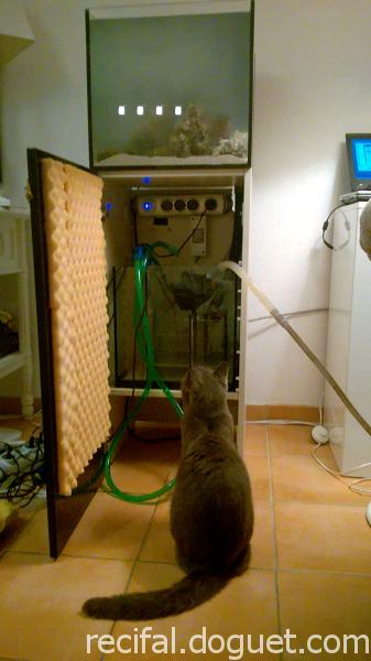 Mumu Reef - Le chat vérifie
